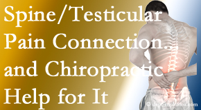Vancouver Disc Centers explains recent research on the connection of testicular pain to the spine and how chiropractic care helps its relief.