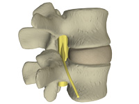 no pain lumbar spine image